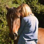 Horse experience in Ecuador1